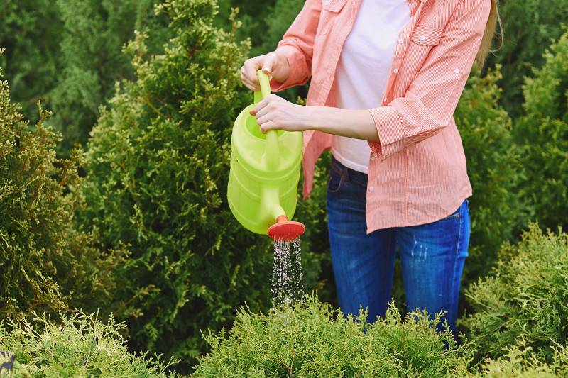 Gardener Carefully Users Can to Prevent Overwatering