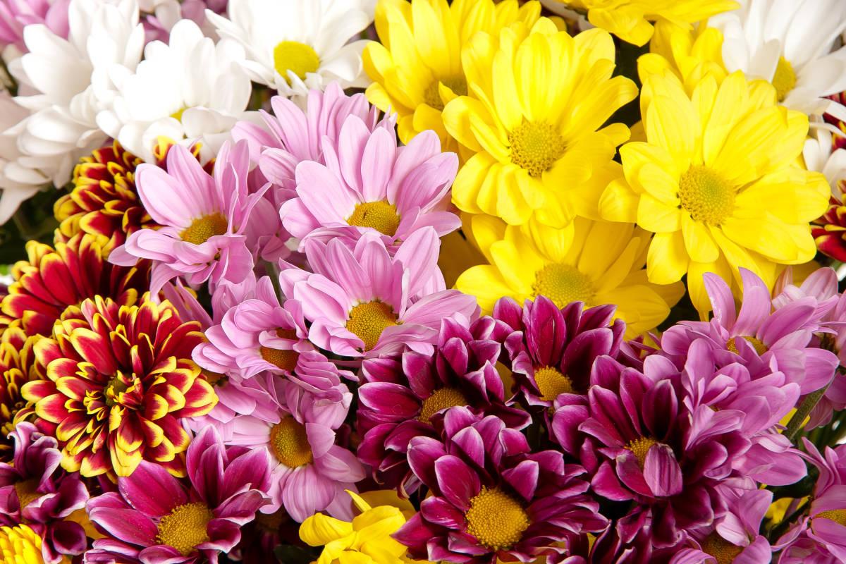 Pom Pom Mum Bouquets