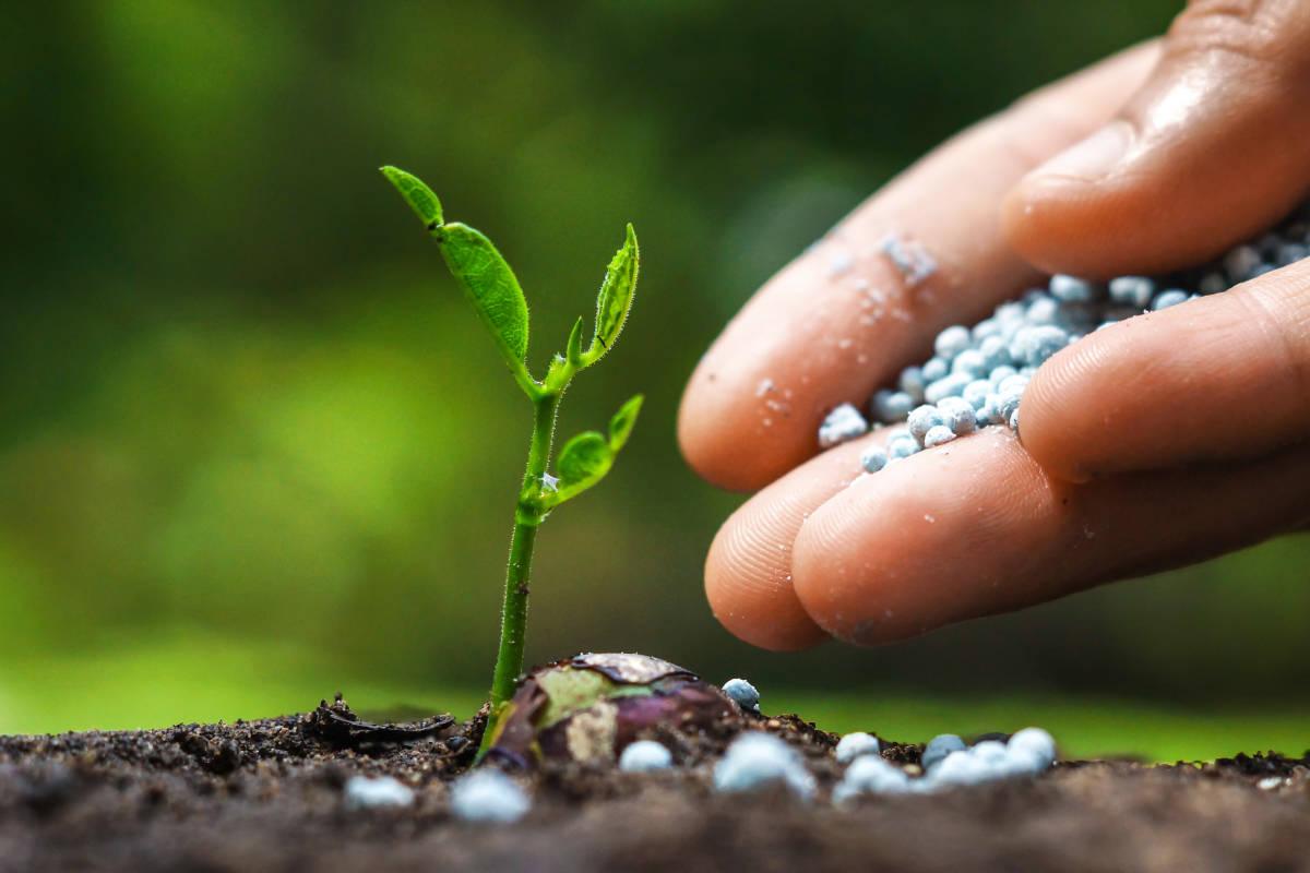 Products koolau farmers - Best vegetable garden soil amendments ...